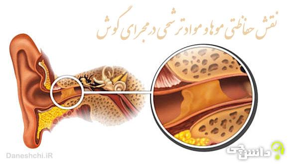 نقش حفاظتی موها و مواد ترشحی در مجرای گوش