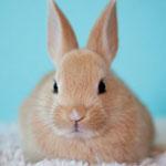 جانور خرگوش