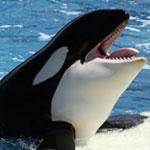 جانور نهنگ