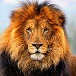 جانور شیر