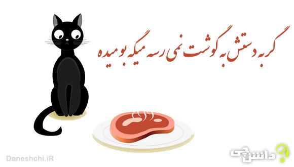 گربه دستش به گوشت نمی رسه