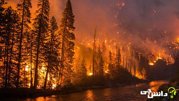 تحقیق در مورد آتش سوزی جنگل