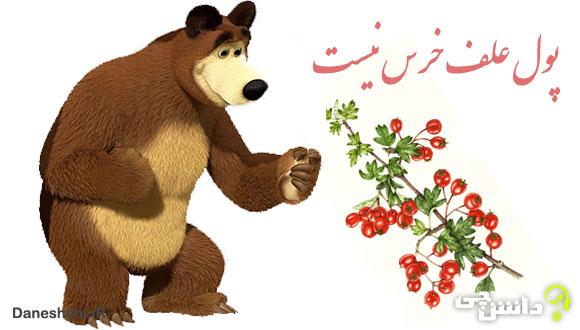 ضرب المثل پول علف خرس نیست