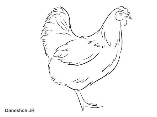 نقاشی مرغش یک پا دارد