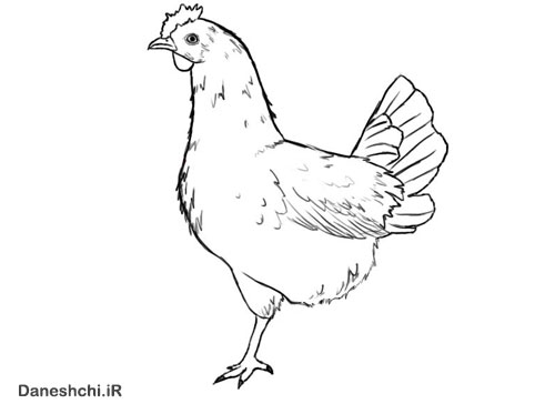 نقاشی مرغش یک پا داره