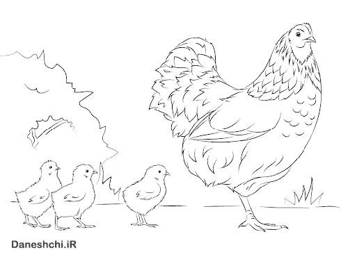 نقاشی مرغ یک پا دارد