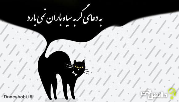 به دعای گربه سیاه باران نمیآید