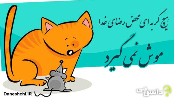 هیچ گربه ای محض رضای خدا موش نمی گیرد