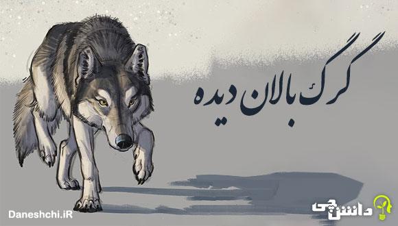 گرگ بالان دیده