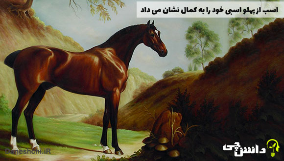اسب از پهلو اسبی خود را به کمال نشان می داد