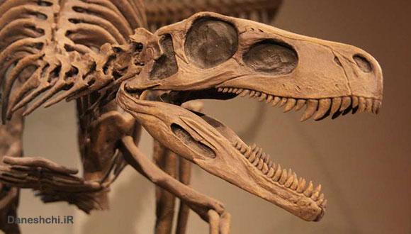 فسیل دایناسور