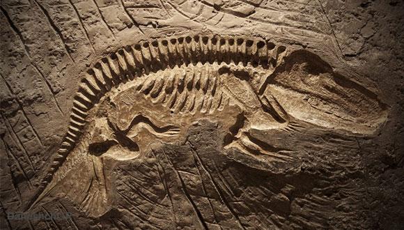 فسیل دیگر از دایناسور
