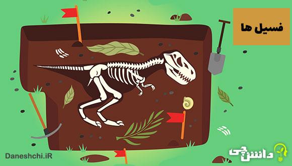 تصاویری از فسیل های جانداران