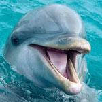 جانور دلفین