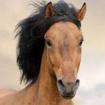 جانور اسب